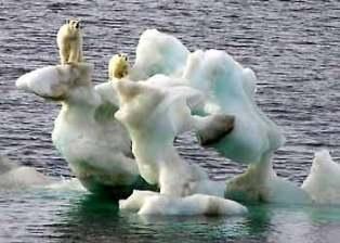 Polar Bears Stranded on Iceberg - WWF