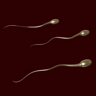 spermies